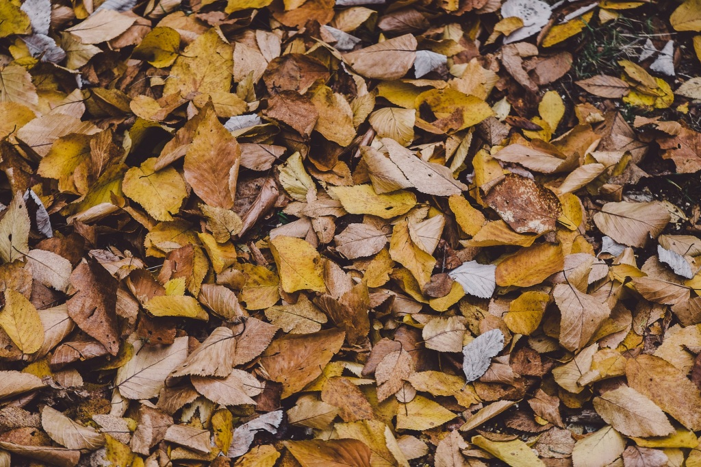 dried-leaves